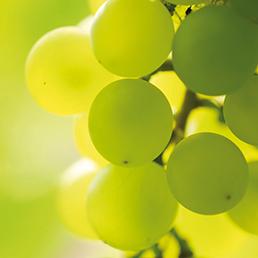 sauvignonblanc druif